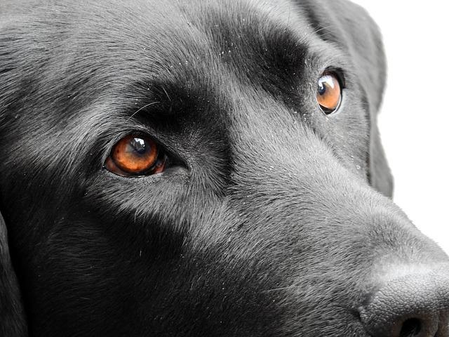 7f118f9396 Sokan bírálják azt a hozzáállást, hogy a kutyának a gazdája legyen a  falkavezére, míg sokan így tartják helyesnek, és csupa fizikai eszközzel  próbálják ...